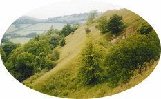 A Cotswold scarp slope